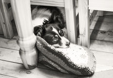 Λυπημένο σκυλί κατοικίδιων ζώων Στοκ Φωτογραφίες