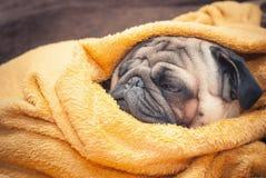 Λυπημένο σκυλί μαλαγμένου πηλού που τυλίγεται σε ένα κίτρινο κάλυμμα υφασμάτων στοκ φωτογραφία με δικαίωμα ελεύθερης χρήσης