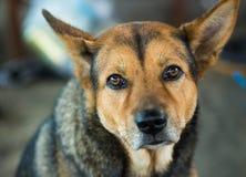 Λυπημένο σκυλί, που εξετάζει τη κάμερα Στοκ εικόνα με δικαίωμα ελεύθερης χρήσης
