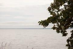 Λυπημένο τοπίο φθινοπώρου, ακροθαλασσιά και μόνο δέντρο Στοκ εικόνες με δικαίωμα ελεύθερης χρήσης