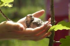 λυτρωτές χεριών Στοκ εικόνες με δικαίωμα ελεύθερης χρήσης