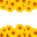 λωρίδες λουλουδιών Στοκ Φωτογραφία