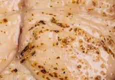 Λωρίδα του pangasius Στοκ φωτογραφίες με δικαίωμα ελεύθερης χρήσης