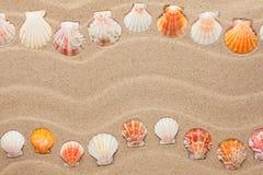 Λωρίδα των κοχυλιών θάλασσας που βρίσκονται στην άμμο Στοκ εικόνες με δικαίωμα ελεύθερης χρήσης