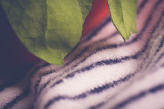Λωρίδες φραουλών στοκ φωτογραφία με δικαίωμα ελεύθερης χρήσης