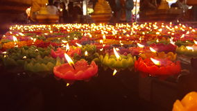 Λωτός κεριών Στοκ Εικόνες