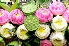 λωτός λουλουδιών seedpod Στοκ φωτογραφία με δικαίωμα ελεύθερης χρήσης