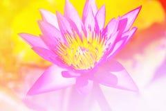 Λωτός λουλουδιών pistil Στοκ φωτογραφίες με δικαίωμα ελεύθερης χρήσης