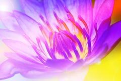 Λωτός λουλουδιών pistil Στοκ φωτογραφία με δικαίωμα ελεύθερης χρήσης