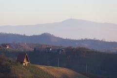 Λόφοι αμπελώνων στην Κροατία στοκ εικόνες