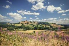 Λόφοι θερινής επαρχίας στη φωτεινή ηλιόλουστη ημέρα στην Ουαλία στοκ φωτογραφία με δικαίωμα ελεύθερης χρήσης