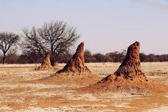 Λόφοι τερμιτών στη Ναμίμπια Αφρική στοκ φωτογραφία