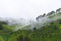 Λόφοι της Misty Munnar - άσπρα σύννεφα που κατεβαίνουν πέρα από τους κήπους τσαγιού στο Κεράλα, Ινδία Στοκ εικόνες με δικαίωμα ελεύθερης χρήσης