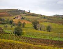 Λόφοι των αμπελώνων το φθινόπωρο Piedmont, Ιταλία στοκ φωτογραφία με δικαίωμα ελεύθερης χρήσης