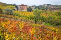 Λόφοι των αμπελώνων το φθινόπωρο Piedmont, Ιταλία στοκ φωτογραφία