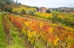 Λόφοι των αμπελώνων το φθινόπωρο Piedmont, Ιταλία στοκ εικόνες