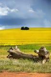 Λόφοι Canola στοκ εικόνες