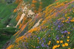 Λόφοι Wildflower Chino Στοκ Φωτογραφίες