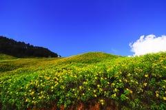 λόφος λουλουδιών κίτρινος Στοκ Εικόνες