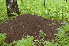 λόφος μυρμηγκιών Στοκ φωτογραφία με δικαίωμα ελεύθερης χρήσης