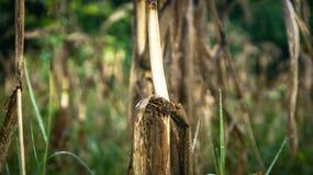λόφος πεδίων βραδιού καλαμποκιού ανασκόπησης στοκ εικόνα