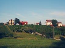Λόφος τοπίων αμπελώνων Στοκ εικόνα με δικαίωμα ελεύθερης χρήσης