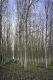 Λόχμη των λευκών το πρόωρο φθινόπωρο Εικόνα χρώματος Στοκ εικόνα με δικαίωμα ελεύθερης χρήσης