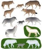 Λύκοι και λύκος-wolf-cubs Απεικόνιση αποθεμάτων