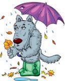 Λύκος με το φθινόπωρο φύλλων βροχής ομπρελών απεικόνιση αποθεμάτων