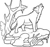 Λύκος που ουρλιάζει στο φεγγάρι Στοκ Εικόνες