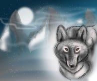 Λύκος στη νύχτα Στοκ Φωτογραφίες