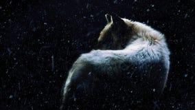 Λύκος στο σκοτεινό δάσος με την πτώση χιονιού