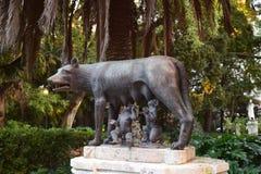 Λύκος της Ρώμης Στοκ εικόνα με δικαίωμα ελεύθερης χρήσης