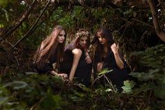Μάγισσες στο σκοτεινό θερινό δάσος στοκ φωτογραφίες με δικαίωμα ελεύθερης χρήσης
