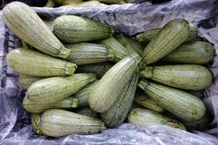 Μάγδα Zucchinis, ελληνική αγορά οδών Στοκ Εικόνες