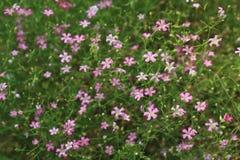 Μάζα λουλουδιών με τα φύλλα Στοκ Φωτογραφία