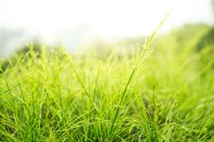 Μάζα χλόης με το φως του ήλιου στοκ εικόνα με δικαίωμα ελεύθερης χρήσης