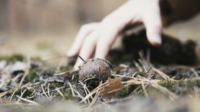 Μάζεμα με το χέρι ενός μανιταριού φιλμ μικρού μήκους