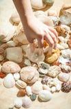 Μάζεμα με το χέρι του μαύρου μαργαριταριού από τον πυθμένα της θάλασσας στοκ φωτογραφία