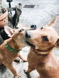 Μάθετε πώς να φιλήσει! Στοκ Φωτογραφία
