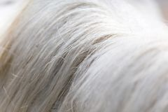Μάιν αλόγων ως υπόβαθρο Στοκ Φωτογραφία