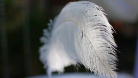 Μάνδρα με ένα φτερό στον αέρα απόθεμα βίντεο