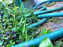 μάνικα κήπων δ 300 κανόνων Στοκ Εικόνες