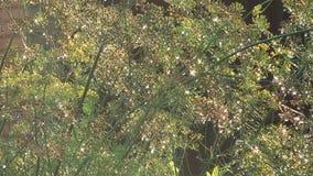 Μάραθο. φιλμ μικρού μήκους