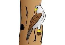 Μάτια αετών Στοκ Εικόνες