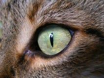 Μάτια γάτας στοκ εικόνες με δικαίωμα ελεύθερης χρήσης