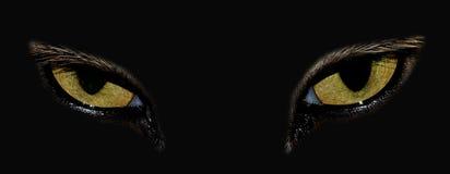 Μάτια γάτας Στοκ Φωτογραφίες