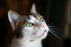 Μάτια γάτας Στοκ φωτογραφίες με δικαίωμα ελεύθερης χρήσης