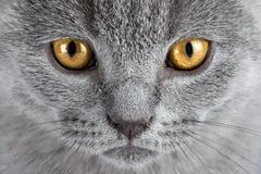 Μάτια γατακιών Στοκ φωτογραφία με δικαίωμα ελεύθερης χρήσης