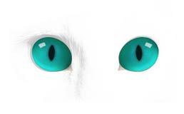 Μάτια γατών, μάτι γατών Στοκ Εικόνα